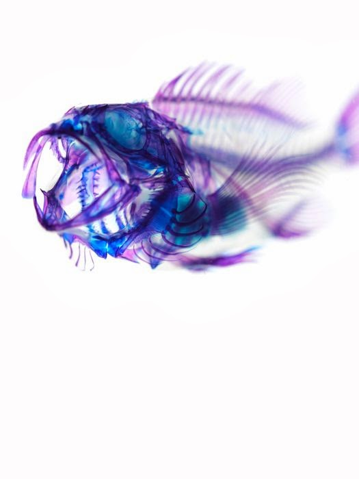 Iori Tomita arte animais transparentes ciência fascinante