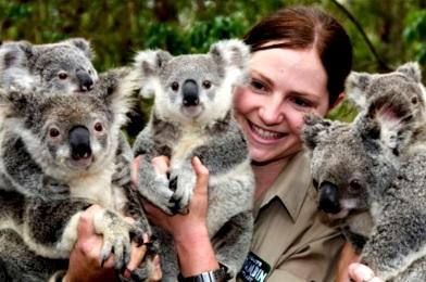 Foto del Koala