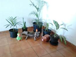 Meus animais no jardim.