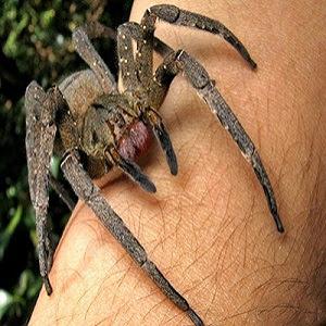 Chuva de aranhas assusta paranaenses