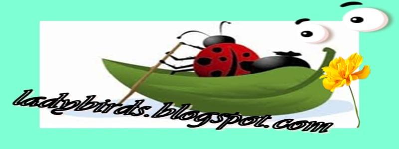 ladybirds88