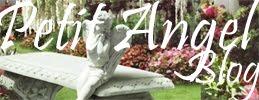 Petit- Angel blog