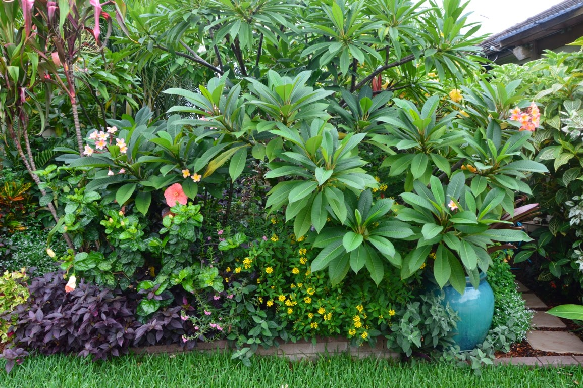 Tropical breeze is a sydney tropical garden filled with a for Landscaping plants