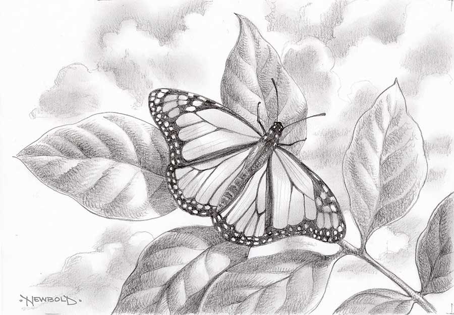 More butterfly drawings life needs art for Cool drawings of butterflies