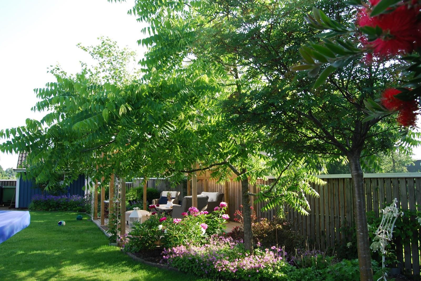 Cattis och eiras trädgårdsdesign: ett besök i en kunds trädgård ...