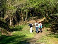 El sender s'endinsa en la zona dels Pins del Verdeguer