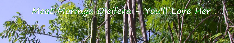 Meet Moringa Oleifera - You'll Love Her