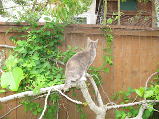 INVISIBLE, ELECTRIC, PET-FENCE MALFUNCTIONING? LEARN HOW