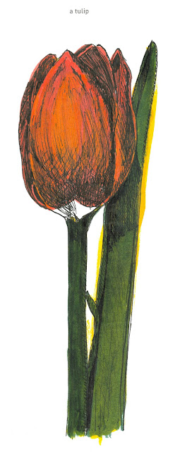 642 Things to Draw 40 - A Tulip - Pen and Ink with watercolour by Ana Tirolese ©2012