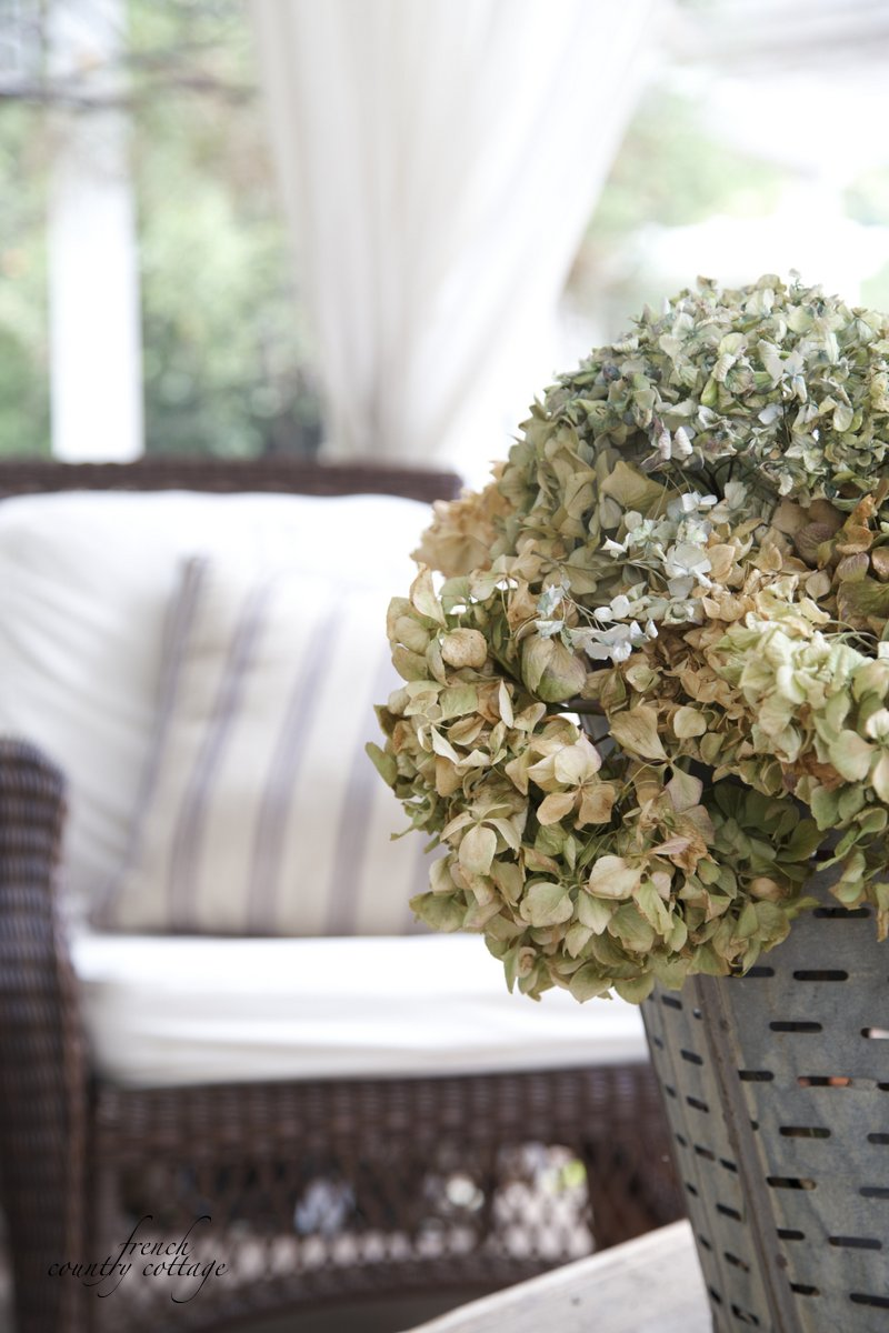 hydrangeas in olive bucket patio Autumn