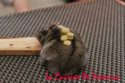 倉鼠 Hamster