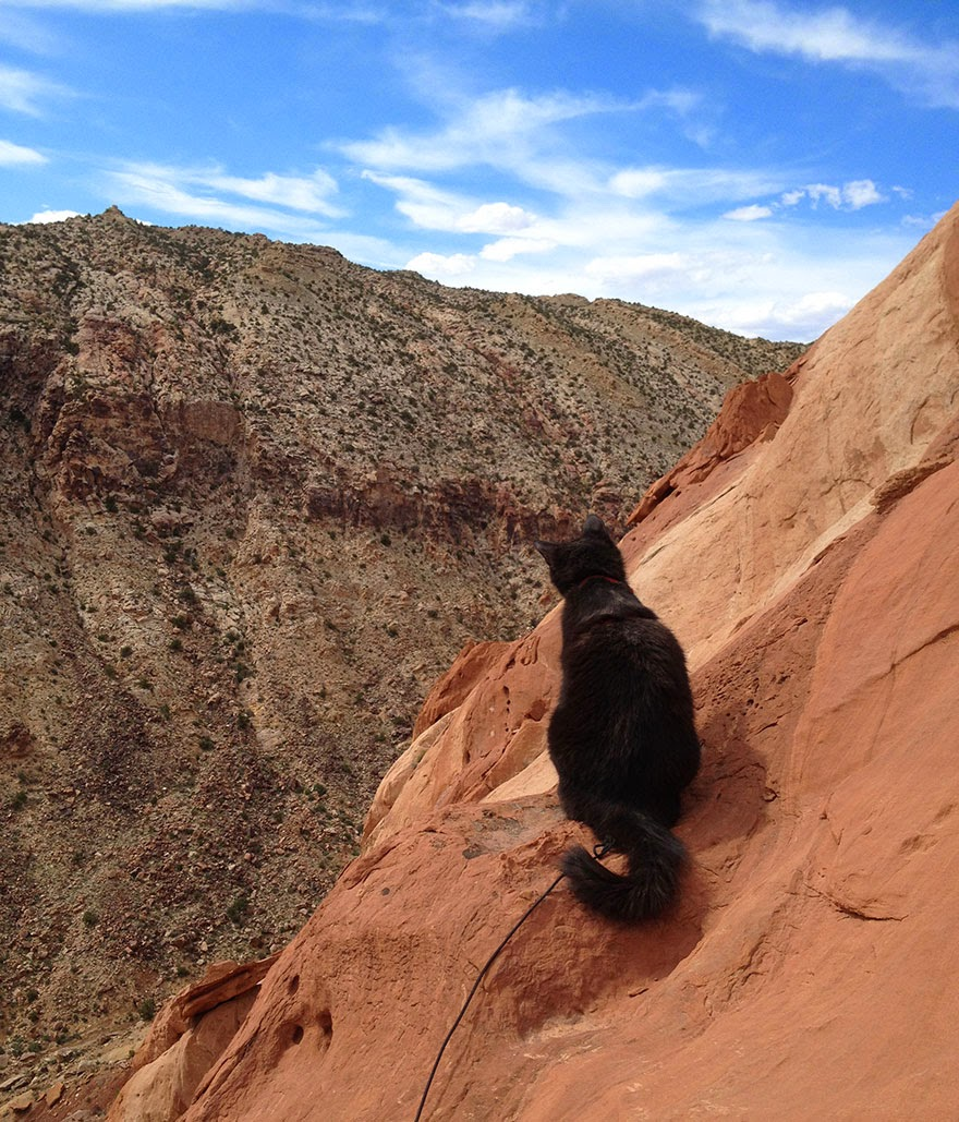 Millie's friend Kenneth leading a pitch in the American South-West - My Adopted Cat Is The Best Climbing Partner Ever