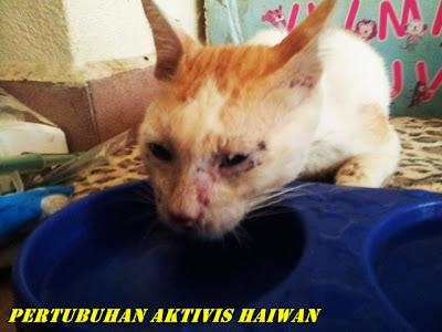 Lagi 16 Ekor Kucing Berjaya Dikeluarkan Dari Pusat