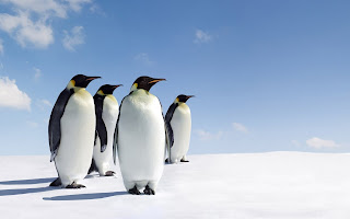 Penguins Ice Sky HD Wallpaper