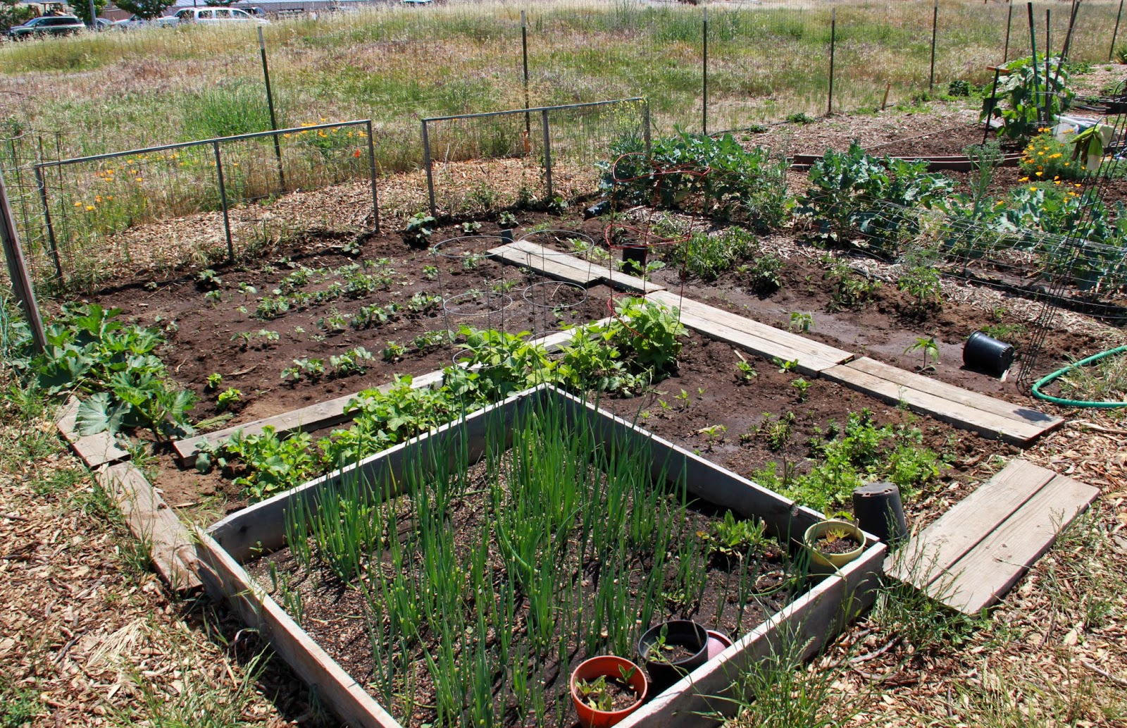 Garden plot ideas garden plot idea 2 gardens s veg plot for Layout garden plots