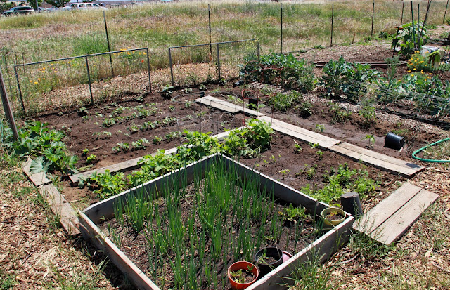 my first garden photos 7 different community garden plot designs
