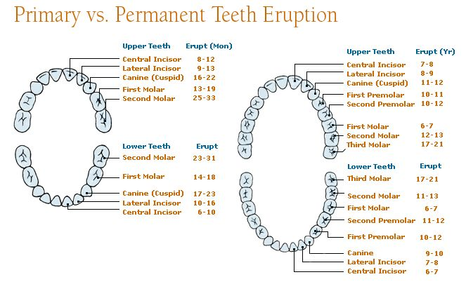 Tooth development: Tooth development