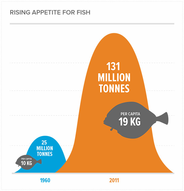 over fishing problems and solutions This causes two serious problems related to overfishing there is a solution to overfishing and thereby allowing the fish to become populated and sustainable.