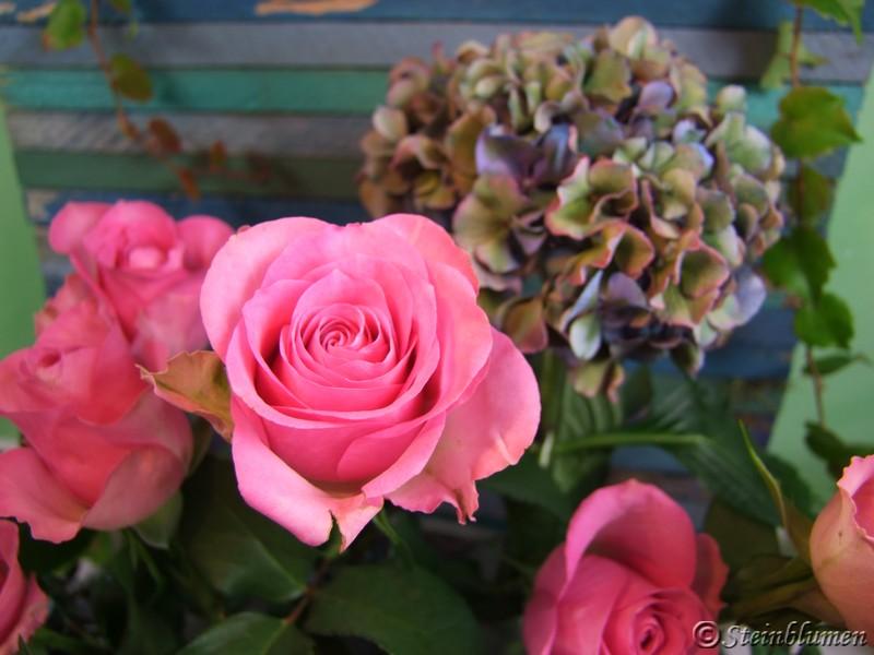 Rosen und Hortensien