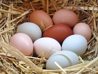 A hen can manage to cover and keep warm approximately 12 eggs proportionate to her size, meaning: if she is a bantam, it is reasonable to expect that she can care for 12 bantam sized eggs, fewer if the eggs are from a larger hen.