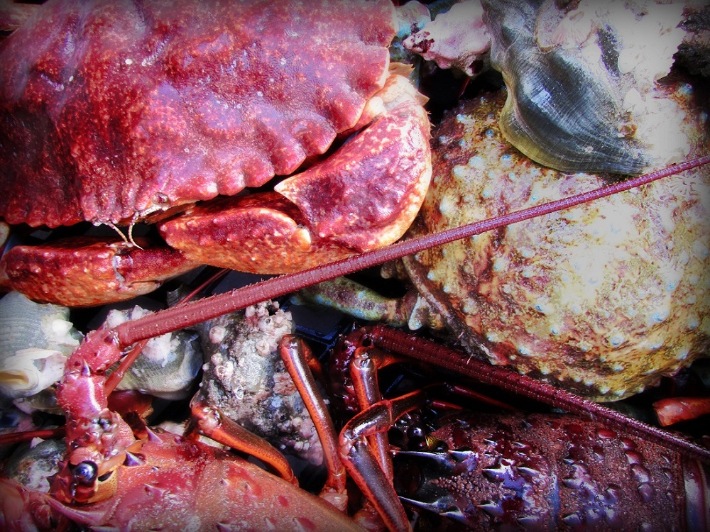 spiny lobster, rock crab, spider crab, Wild West Commercial Fishing, local seafood, San Diego, Tuna Harbor Dockside Market