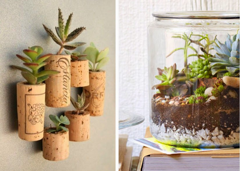 Creative Ways of Growing Succulents