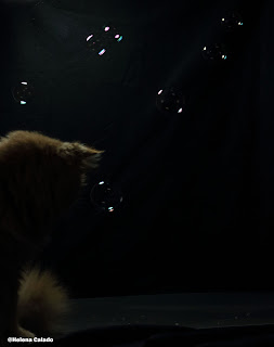 fotografia de bolhas de sabão e o meu gato