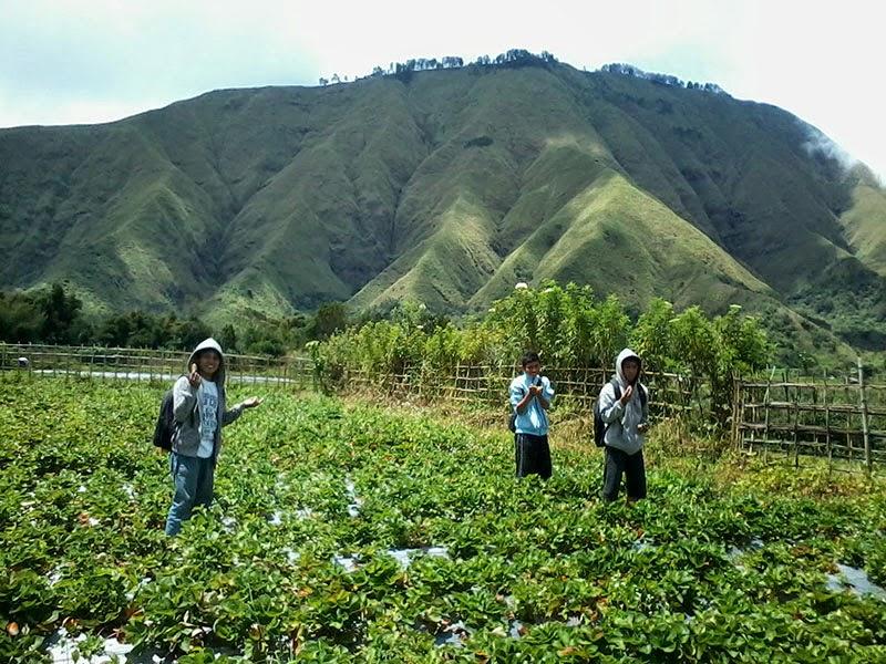 tujuan wisata lombok, tempat wisata lombok, kebun sayur sembalun, kaki gunung rinjani