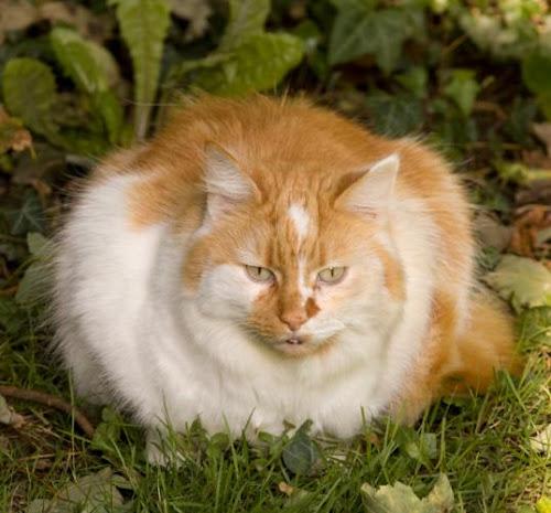 Koleksi Gambar Kucing Keren