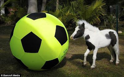 World's Smallest Pony