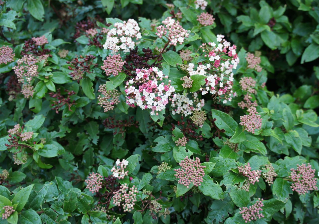 Foragefor... news: Winter Flowering Shrubs