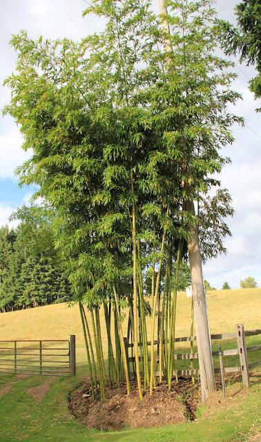Bamboo Garden Edging5