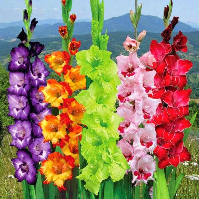 Da Lat in Vietnam– a rhythmic land of flowers and romance