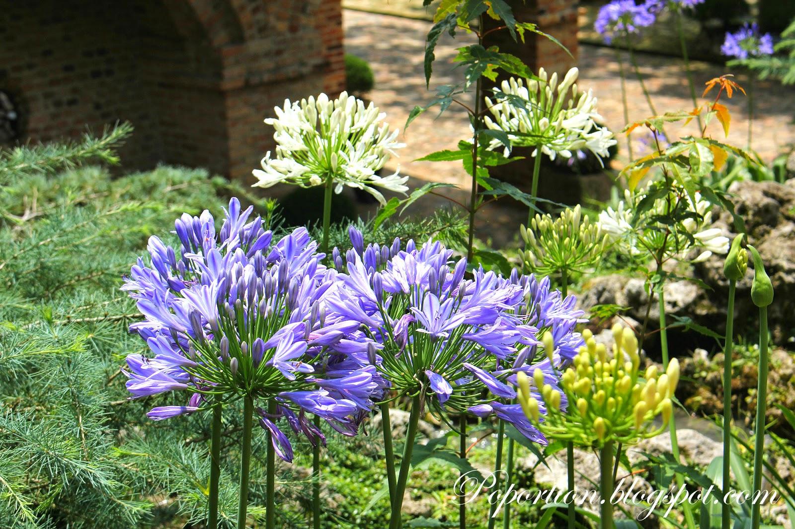 purple flowers bloom