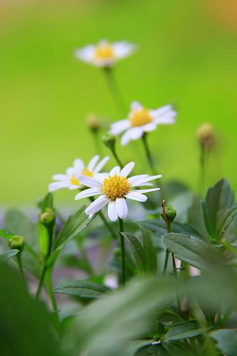hoa dep, hoa hong,  hoa viet,  hoa lan