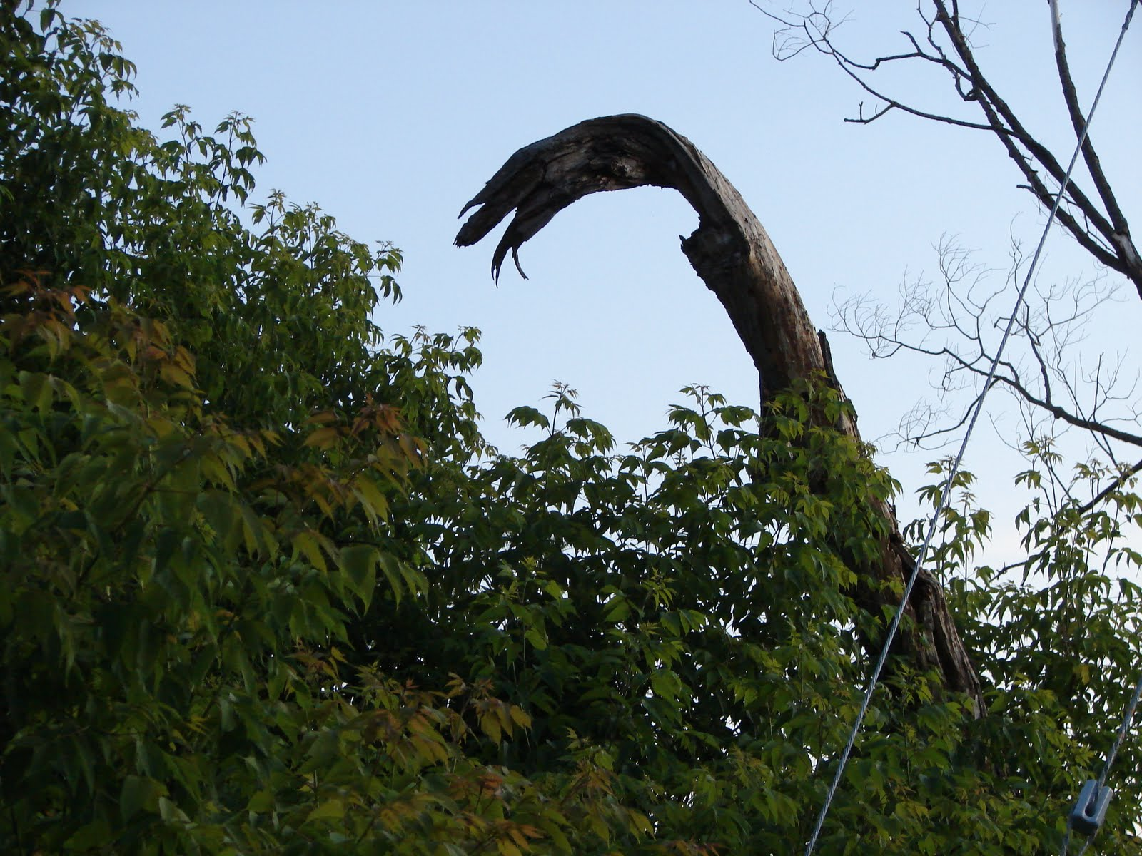 Always Another Day Tomorrow Snake Tree Timmins South