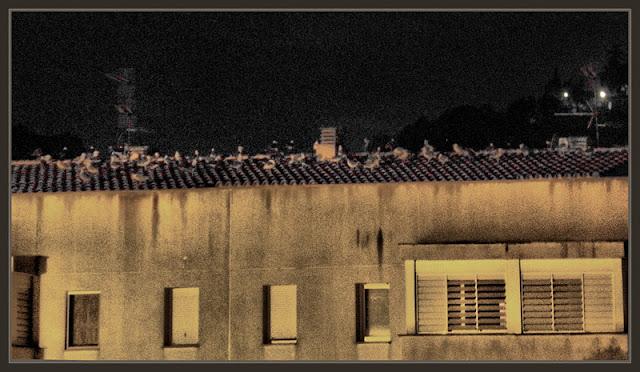 TOSSA DE MAR-GAVINES-GAVIOTAS-PAJAROS-ENCUENTROS-TEJADOS-HOTEL-FOTOS-NOCTURNAS-ERNEST DESCALS
