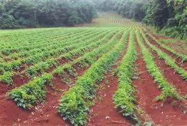 Factors Of Production Land