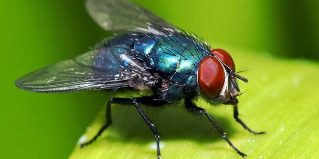 Cara Ampuh Mencegah Serangga Atau Lalat Masuk Rumah
