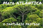 Protetores da Mata Atlântica