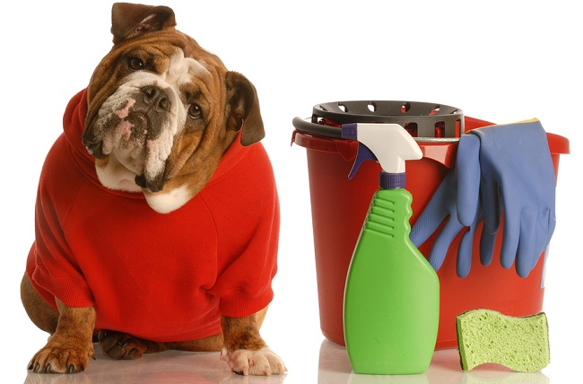 Clean a Dog Carrier