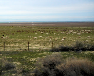 Sheep farms off of I-5