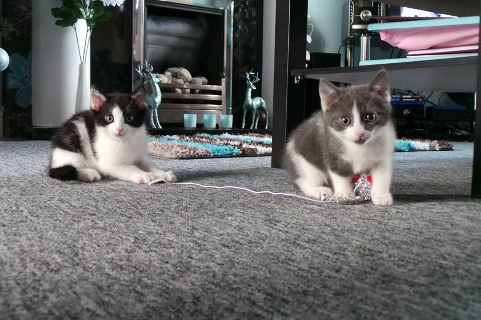 our new kittens, kitten blog, kittens blog post