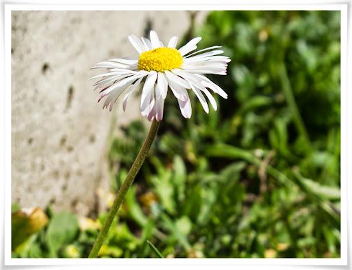 Blomma i parken