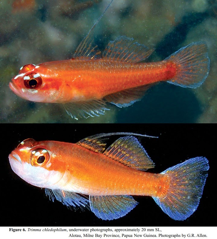 [Ichthyology 2015] Four New Species of Trimma (Pisces…