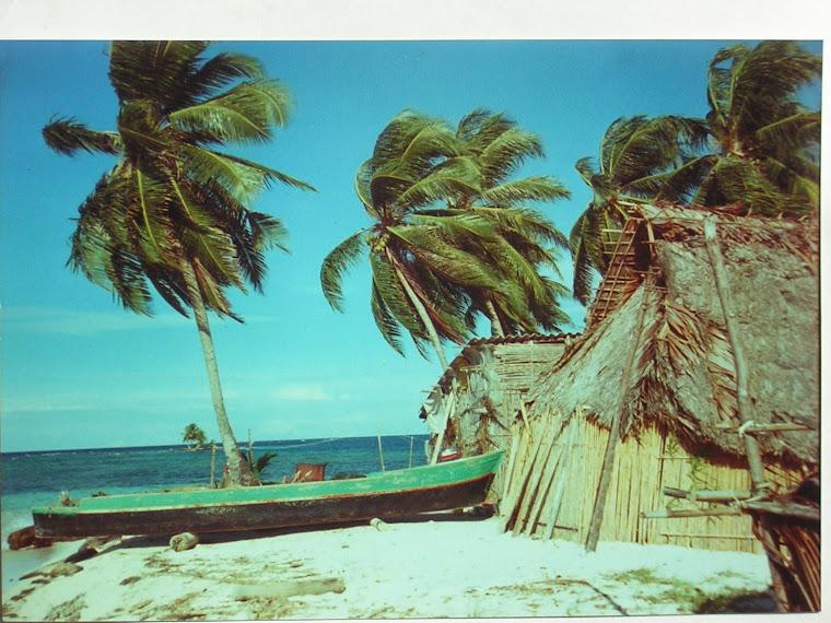 Ponga and huts