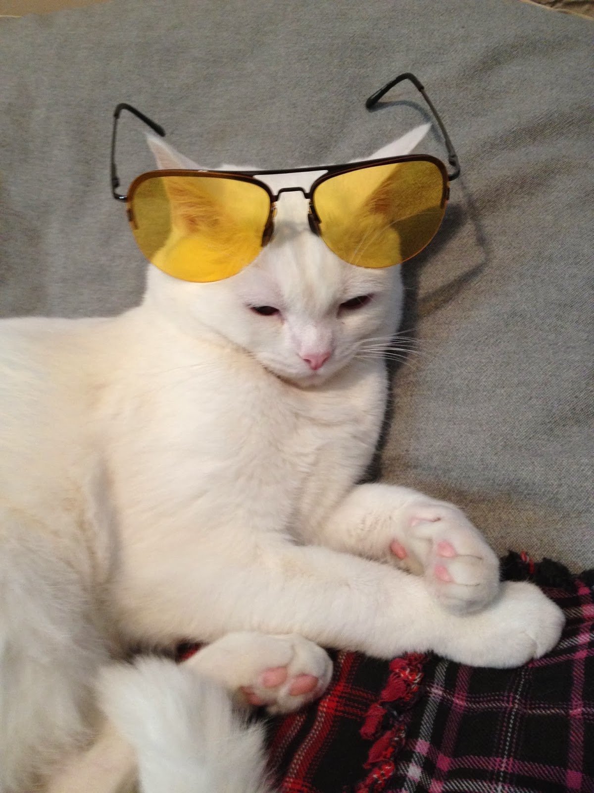 http://www.huffingtonpost.com/leslie-goshko/5-reasons-kitten-proves-h_b_4590319.html?utm_hp_ref=comedy&ir=Comedy