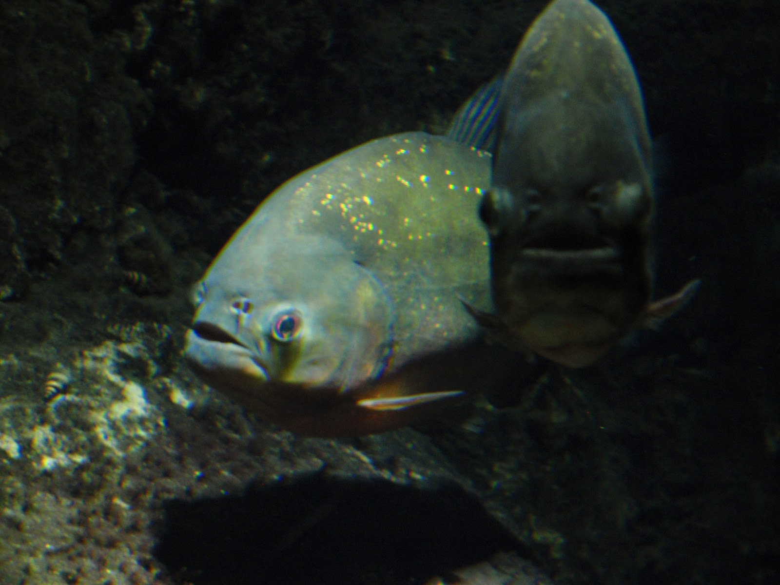 Weird wonderful bristol aquarium for What fish has eyelids