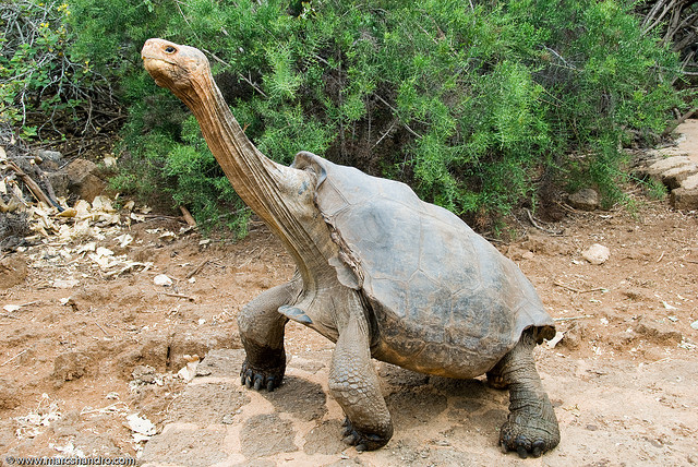 ... facts,baby tortoises,tortoise as pets,tortoise species,tortoises as