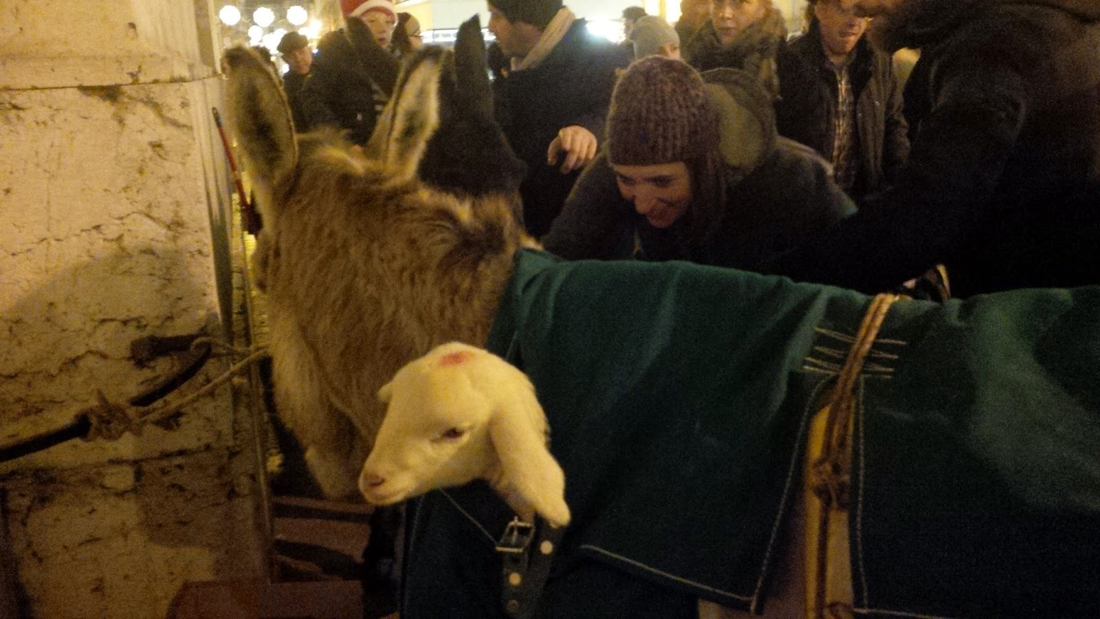 A tiny lamb is nestled in the saddlebag of the donkey